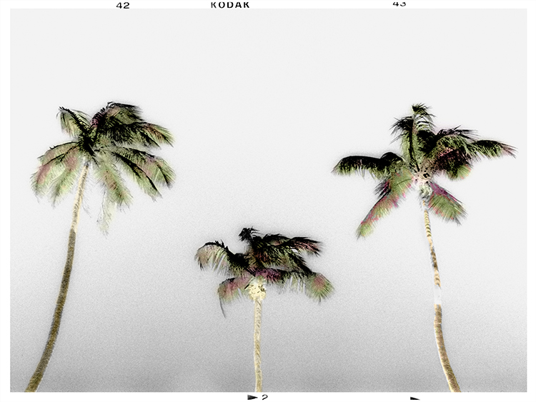 "Bruce Reinfeld, ""3 Palms"""